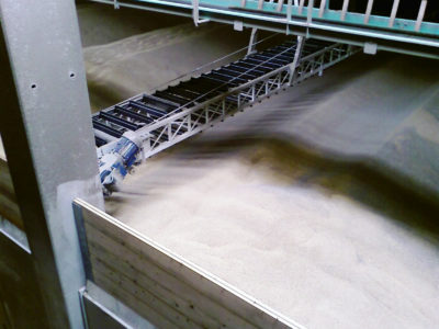 A flat store warehouse filled with grain with an automatic working chain scraper conveyor filling and removing grain
